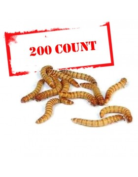 Mealworms - 200