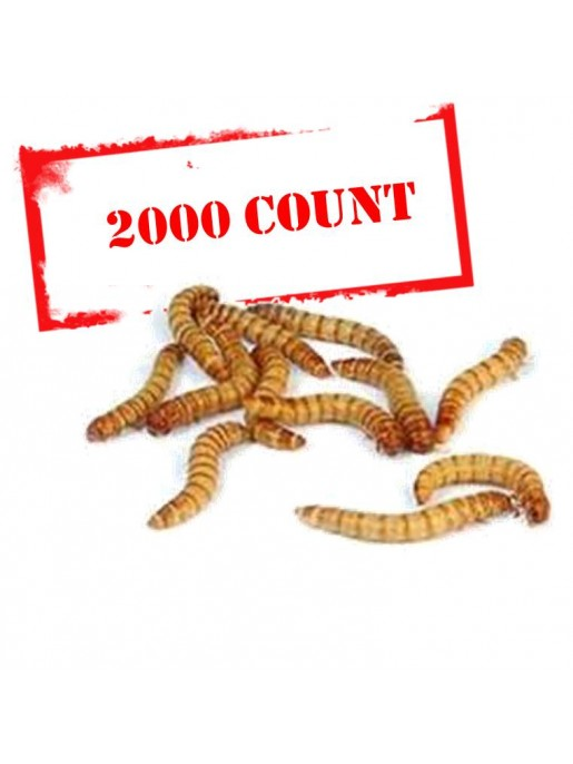 Mealworms - 2000