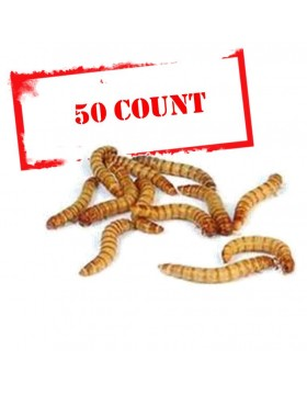 Mealworms - 50