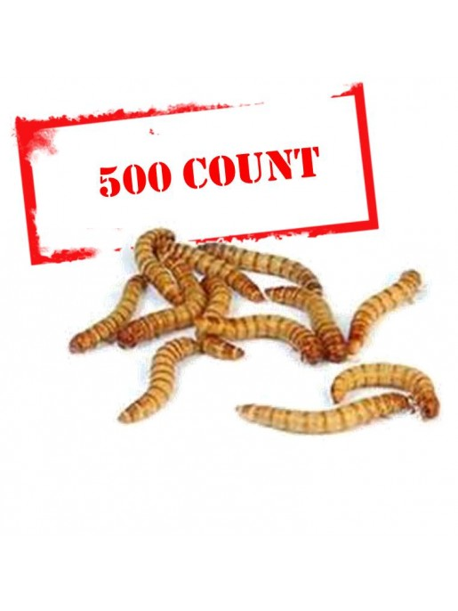 Mealworms - 500